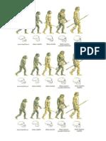 Evolucion Del Hombre