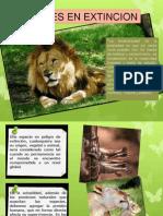 Animales en Peligro[1]