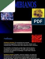 Antiamibianos