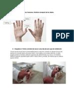 Guía Practica 2. Manejo de La Rata.