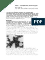 ROTAVIRUS y adenovirus.
