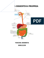 Systema Digestiva Propria Handout Anatomi