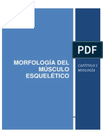 Guia Miologia EQUINO