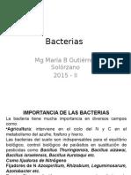Bacterias 3