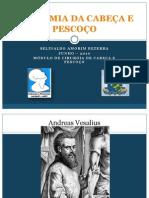 Anatomia Da Cabeca e Pescoco
