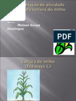 PalestraMilho
