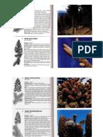 Sken Dzepne Knjige o Drvecu 1