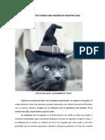 Los Gatos y Su Misión en Nuestra Vida