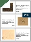 Album Basillariophyta y Euglenophyta