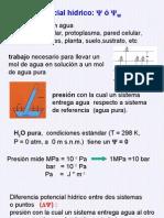 3._potencial_hidrico,_trasporte_cercano_y_lejano_11