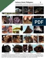 Bats of Mindanao Island