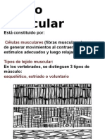 Bilogia Expo - Tejido Muscular