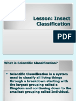 insect classification no background.ppt