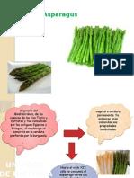 Espárragos (Asparagus Officinalis)
