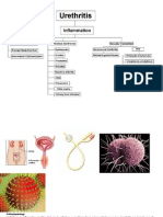 Urethritis Pathophysiology