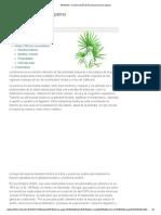 Beneficios y La Información de Serenoa (Serenoa Repens)