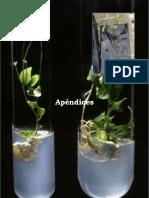 Aclimatacion vitroplantas yuca