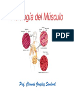 Musculos Mb