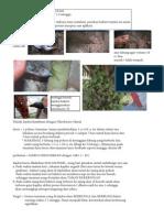 injeksi bakteri_04.pdf