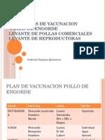 Programas de Vacunacion de pollos