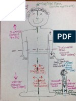 anatomical directions drawing notes