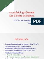 Neurofisiología Normal