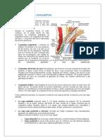 Oftalmología Conjuntiva Ocular