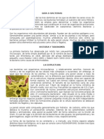 Documento Acerca de Bacterias