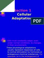 1.3CellularAdaptations