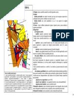 SECTIUNEA 14 ARTERA CAROTIDA EXTERNA RAMURILE COLATERALE.pdf