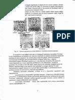 Fiziopatologie Ceamitru 2.pdf