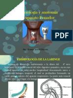 01.Anatomia Laringe