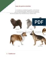 perros 01