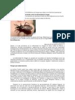 bioinsecticida (chinche besucona)