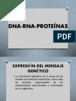 DNA RNA Proteínas