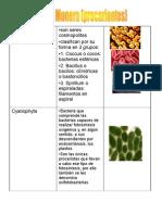 reino-protista-fungi-y-plantae-1195006355164270-1.ppt