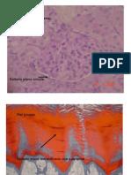 Laminas de Genetica e Histoembriologia