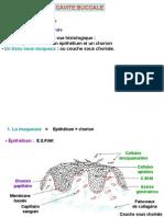 Cavités Buccales Et Glandes Salivaire