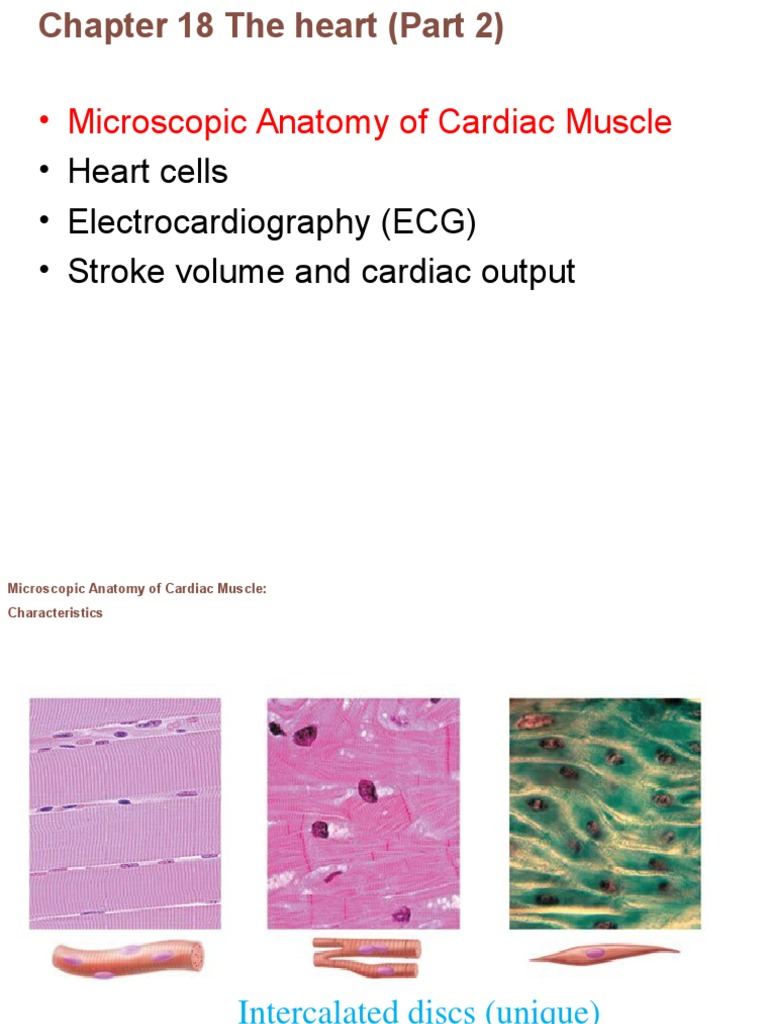 Chapter 18 Anatomy Part 2 Electrocardiography Heart