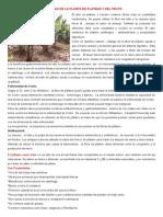 Propiedas de La Planta de Platano y Del Fruto
