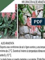 Especie Ariastata