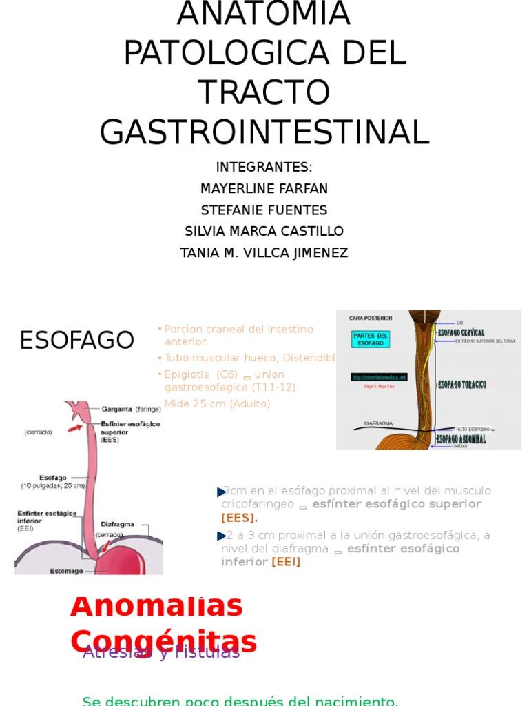 ANATOMIA PATOLOGICA DEL TRACTO GASTROINTESTINAL.pptx