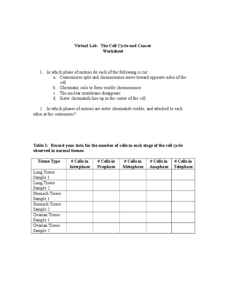 worksheet Virtual Lab The Cell Cycle And Cancer Worksheet Answers the cell cycle and cancer worksheet doc mitosis cycle