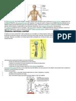Caracteristicas Del Sistema Nervioso