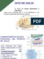 aparatodegolgilisosomasperoxisomas-110719235453-phpapp02