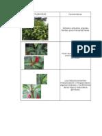 Caracteristicas Rubiaceae y Melastomataceae