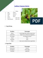 Klasifikasi Tanaman Murbei