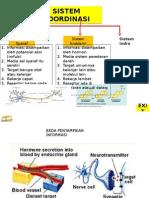 8-sistemkoordinasisyarafhormon-130104231804-phpapp02.pptx