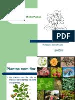 Plantas (Reino Plantae)