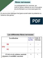 T.nerveux2 (2).ppt